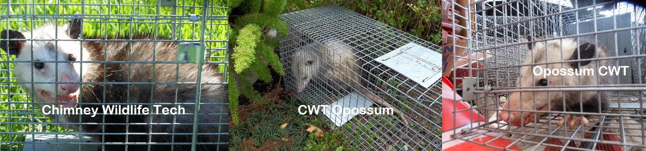 Wildlife removal for opossum in Dallas Houston